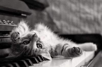 Let me play a tune for you!!