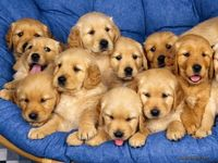 Don't you want to just hug them all!!!!!