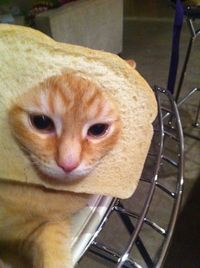 cats surrounded by bread. hilariously cute.