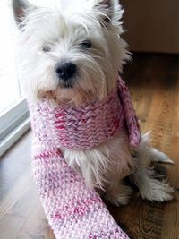 knifty knitter scarf...OMG this Westie is so cute! Gracie would not wear a scarf for 3 seconds
