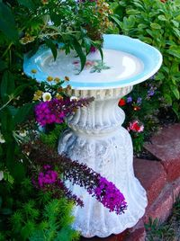 Old concrete planter turned upside down with vintage plate to act as bird bath.