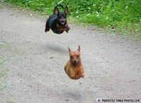 """""""Hover dog ACTIVATE"""""""
