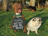 What do you do when crazy/mean/bored people just want to argue with you about pit bulls? Pug and Bug have some great advice: DON'T FEED THE TROLLS! Just walk away. Your dogs deserve your time more than the crazies do.