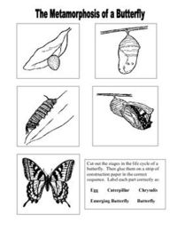 cut, and paste this sequencing worksheet. Use after teaching the life ...
