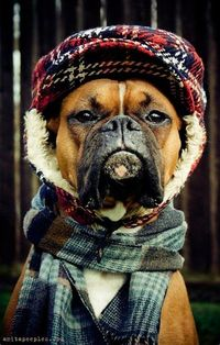 Cap and sweater boxer
