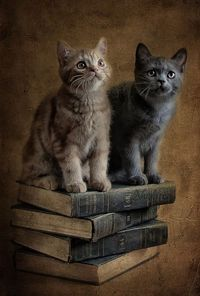 Book Kitties