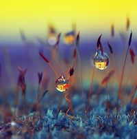 Dew Photography by Diens Silver