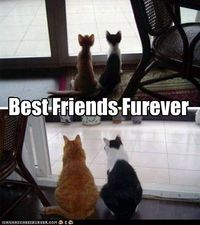 funny pictures - Happy National Best Friends Day!