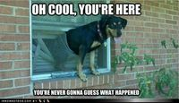 funny dog pictures - You'll Never Believe What Happened!