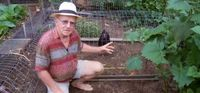 Clever Tunnel System Makes Chickens Do The Gardening ....... This is very cleaver.