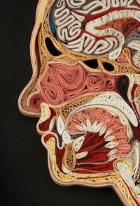 anatomical quilling:paper cross sections of the body