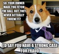 best of lawyer dog meme funny.- Lol Image
