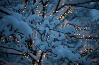 snowy night lights
